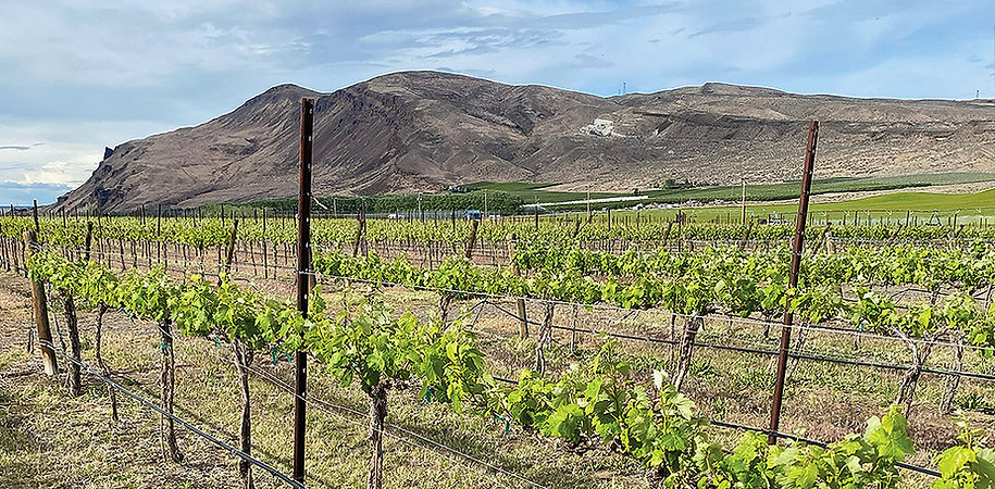 vineyard-gorge2.jpg