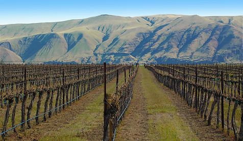 GFW-vineyard-gorge5.jpg