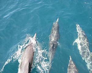 5-sea-bottle-nose-dolphins.jpg