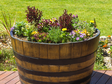 Time for Planting-Wine Barrels for Sale