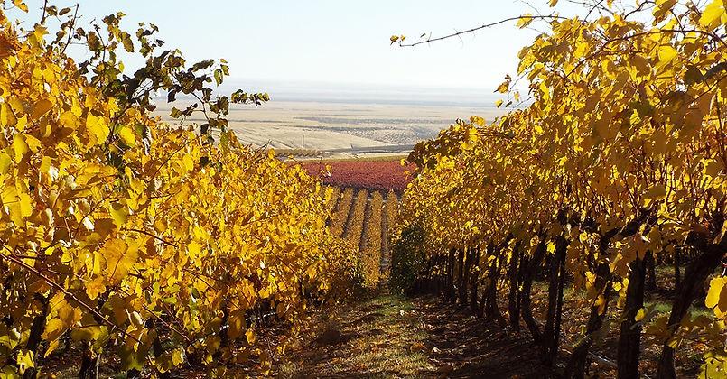 CCW-vineyard-fall1.jpg