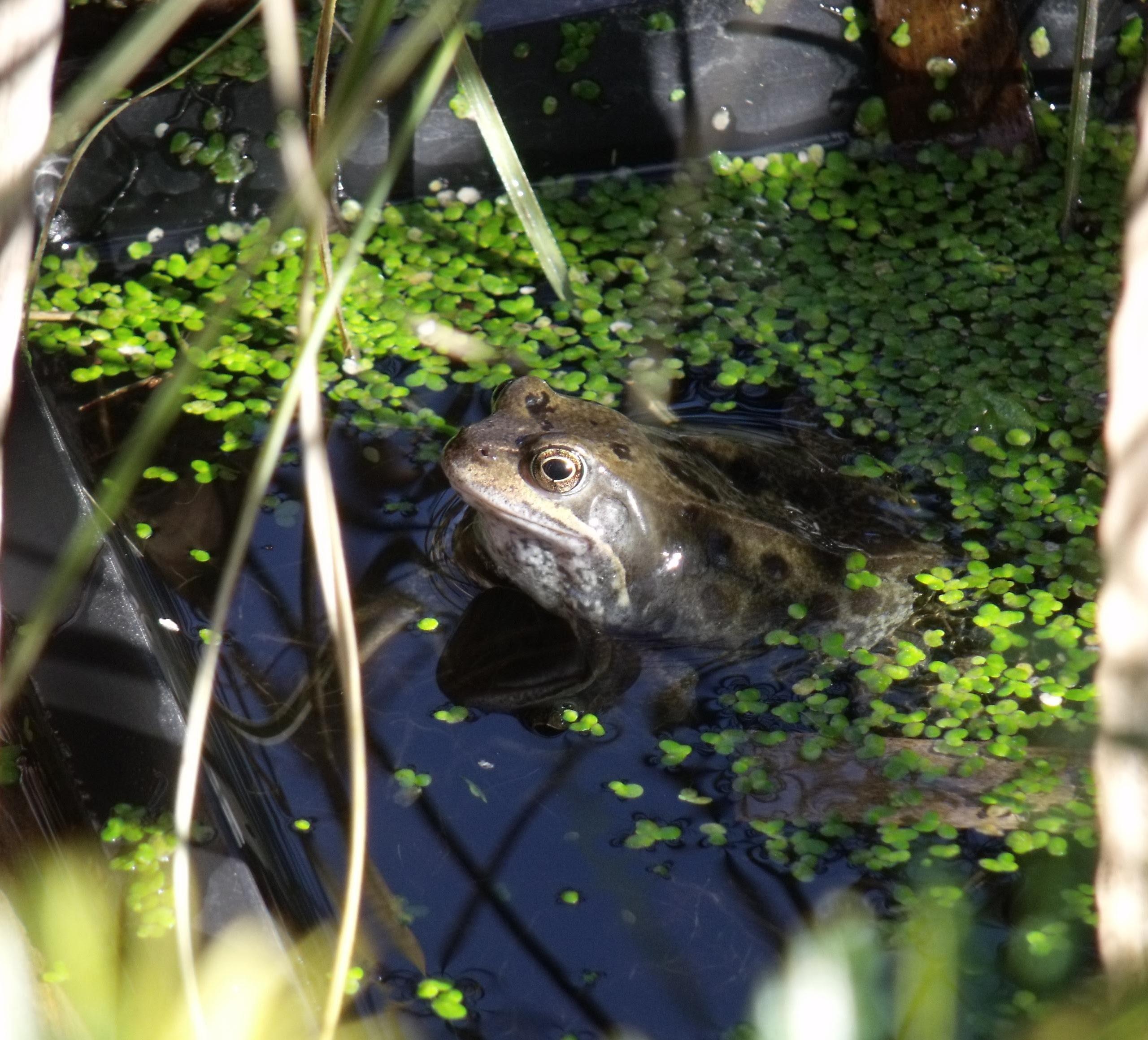 Picasa - frog 1.jpg
