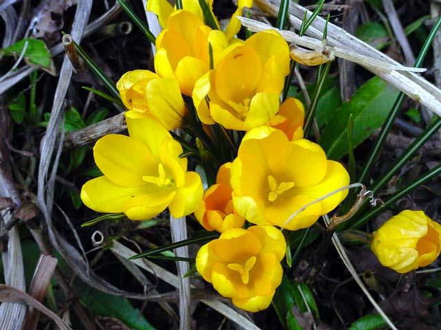 Picasa - Flower1.jpg