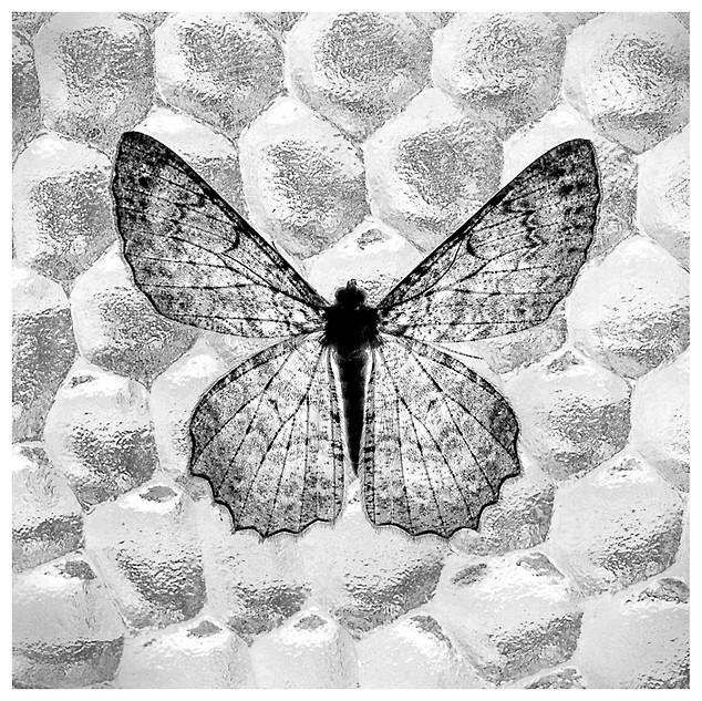Una Polila en la Ventana / A Moth in the Window