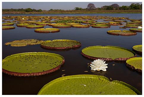 Paisaje de Irupés / Landscape of Giant Waterlilies