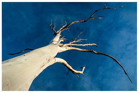 Alcanzando el Cielo / Reaching the Sky