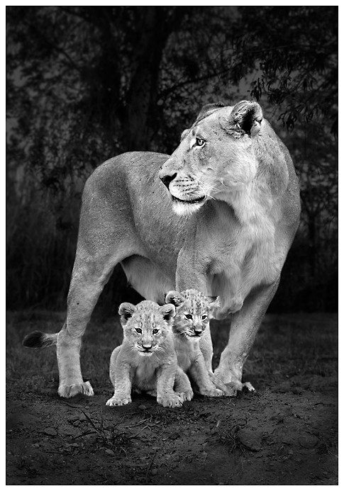 Cuidando a los Pibes / Taking Care of the Cubs