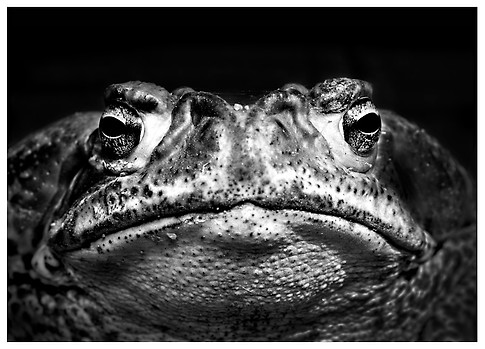 Cara de Sabio / Face of a Wise Guy