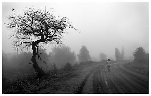 Regreso Entre La Niebla / Foggy Return
