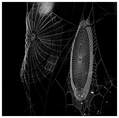 Telas de Araña / Spider Webs