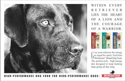 Winchester Dog Food Warrior Ad