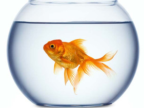 7 Easy Ways To Reach Consumers With The Attention Span Of A Goldfish