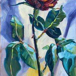 Radiant Rose