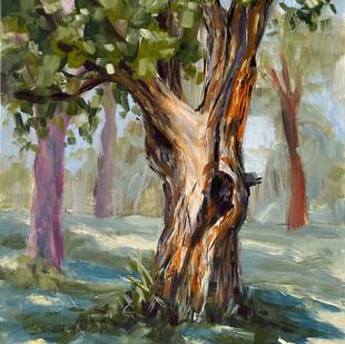 Nokomis Tree