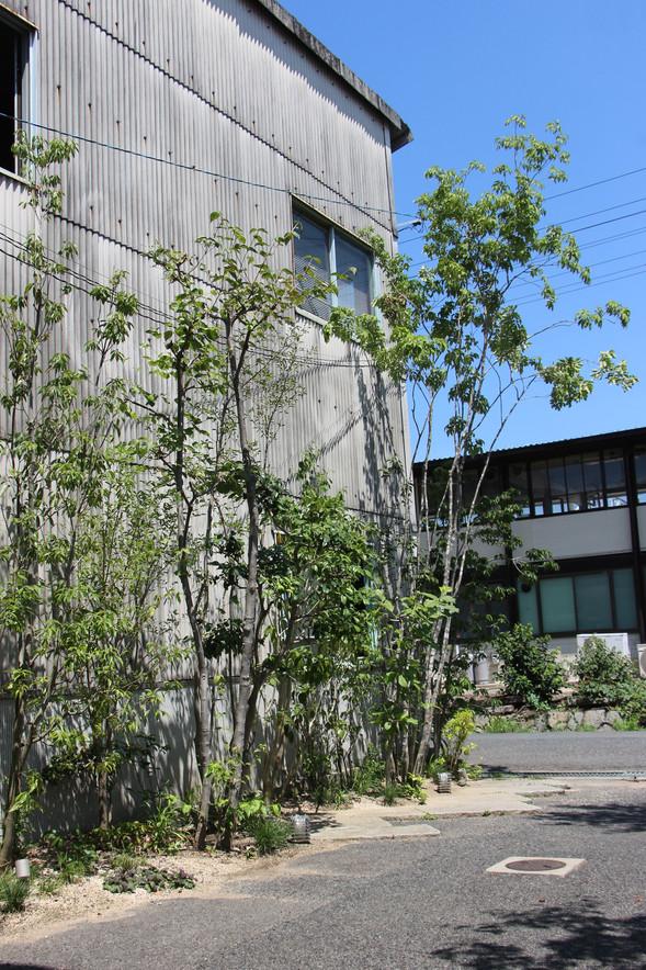 05/17 木々をくぐって ガーデン工事(リノベーション)