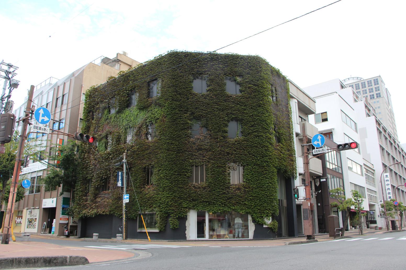建物と緑について(壁面緑化、屋上緑化等)