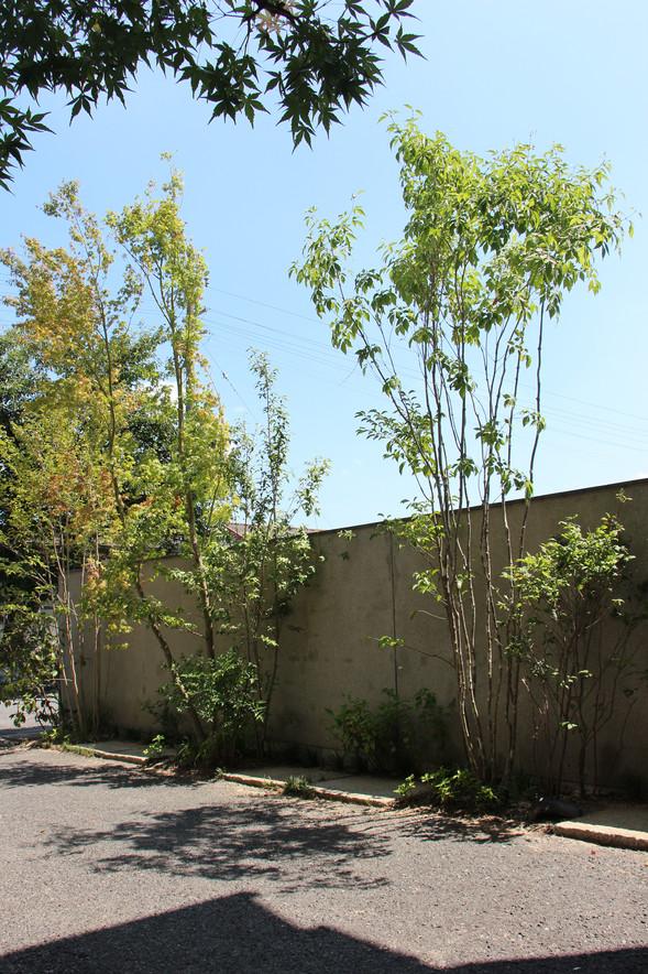 02/17 木々をくぐって ガーデン工事(リノベーション)