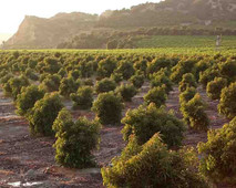 California Growers