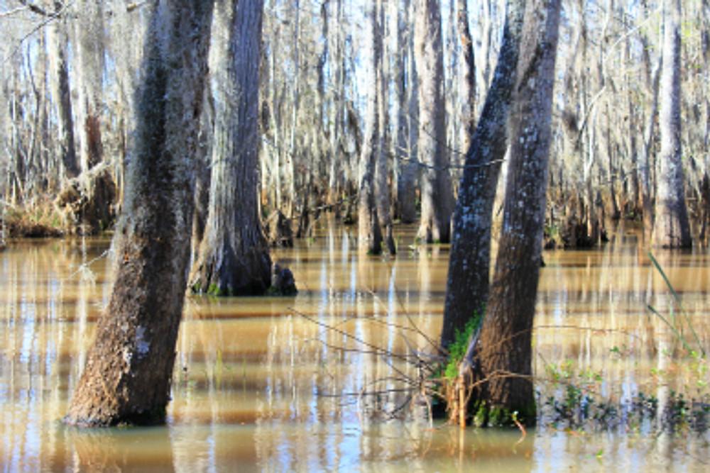 Cajun Encounters Swamp Tour.