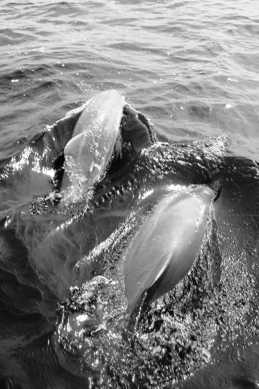 Boating with Dolphins