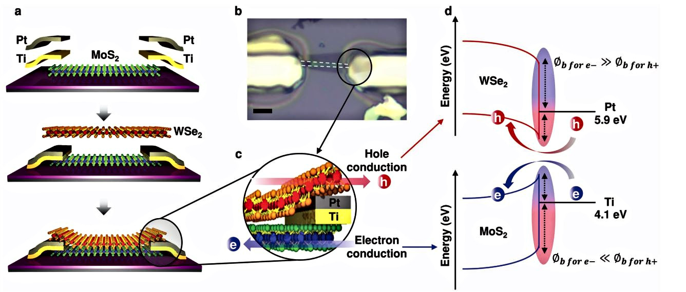 Gate-Tunable Hole and Electron Carrier Transport in Atomically Thin Dual-Channel WSe2/MoS2 Heterostructure for Ambipolar Field-Effect Transistors.