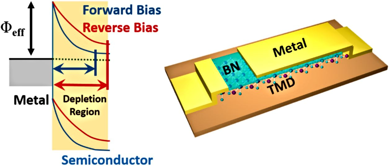Gate Tunable Self-Biased Diode Based on Few Layered MoS2 and WSe2.