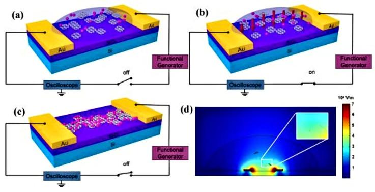 Dielectrophoretic assembly of Pt nanoparticle-reduced graphene oxide nanohybrid for highly-sensitive multiple gas sensor