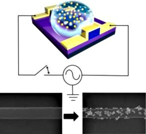 Conductance Control in VO2 Nanowires by Surface Doping with Gold Nanoparticles.