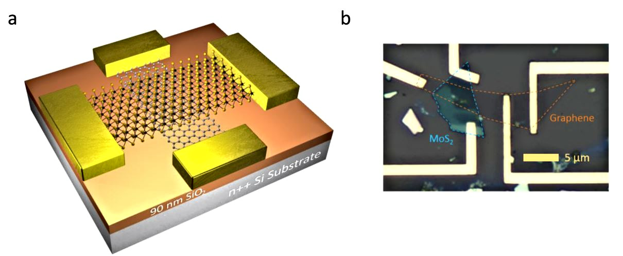 Tunable Electrical and Optical Characteristics in Monolayer Graphene and Few-Layer MoS2 Heterostructure Devices