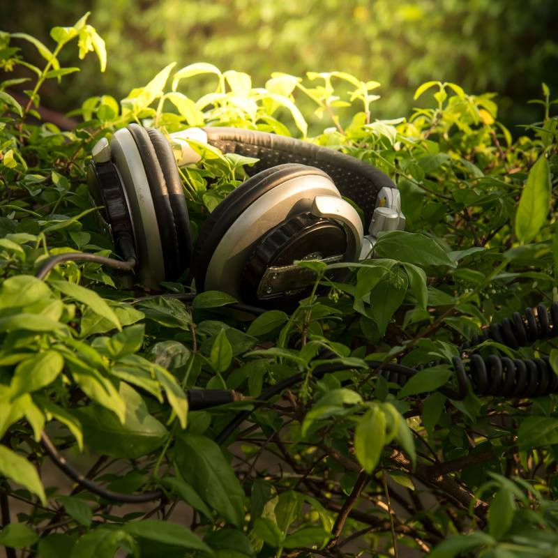 Plant Songs: ADLFringe 2019