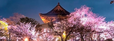 fairy japan.png
