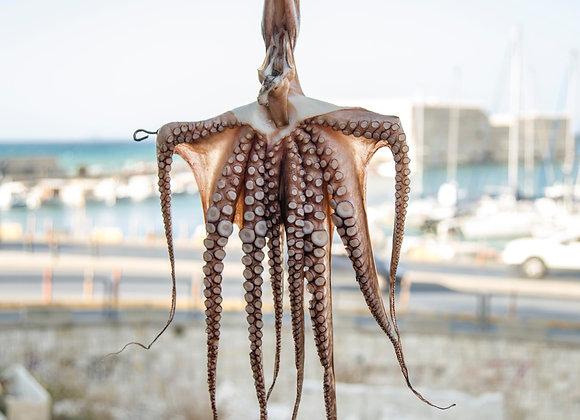 South Australian Octopus Legs FRESH