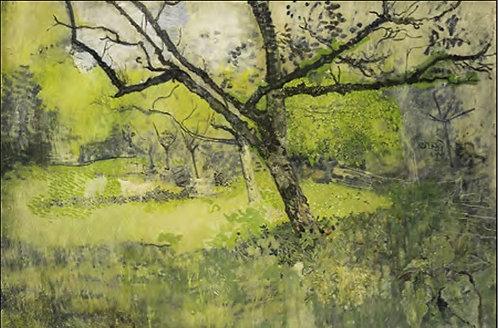 Trees TCOWP039