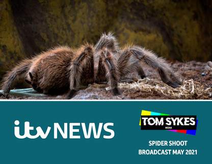 Filming Spiders For ITV News