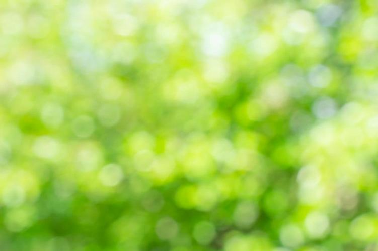 fond-nature-verte-defocalise-ensoleille-