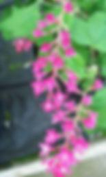 Bill Docherty's Plants| Nursery| Gateshead
