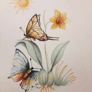 Mariposas   Renacer
