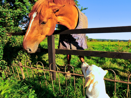 Estate Planning is for the Dogs! (and Cats and Birds and Horses and...)