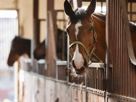 In the New Year, Get More Out of Your Equine Liability Waiver
