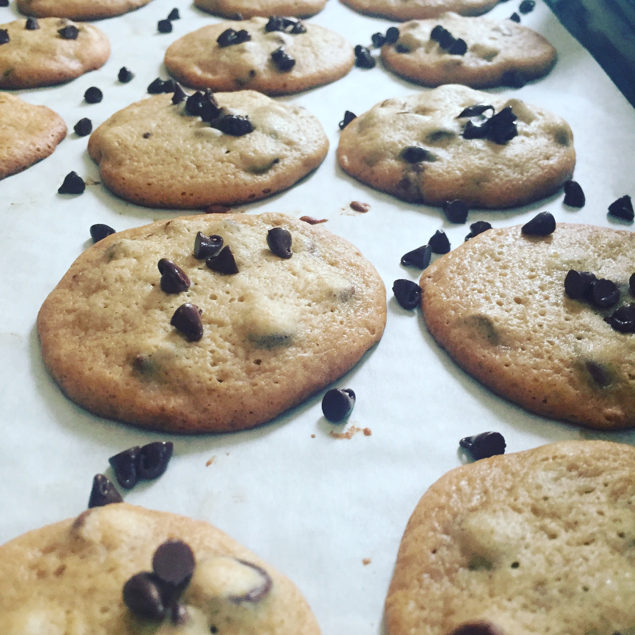 Fresh Baked Chocolate Chip Cookies