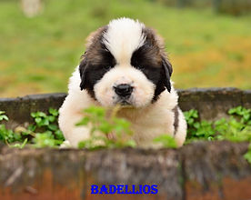 Badellios.jpg