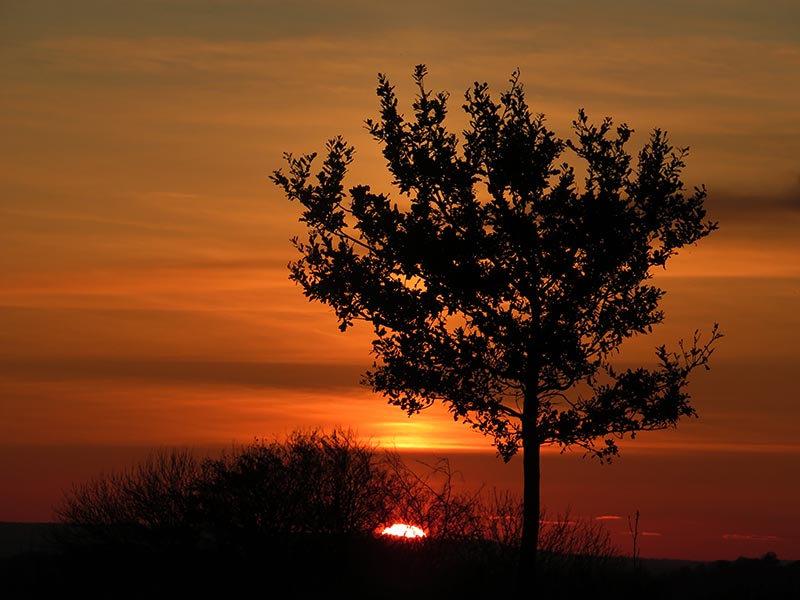 Taurus Oak.jpg
