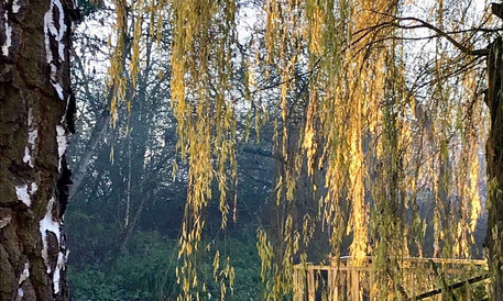 Boat and Willow