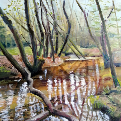 Dalby Forest Stream 1
