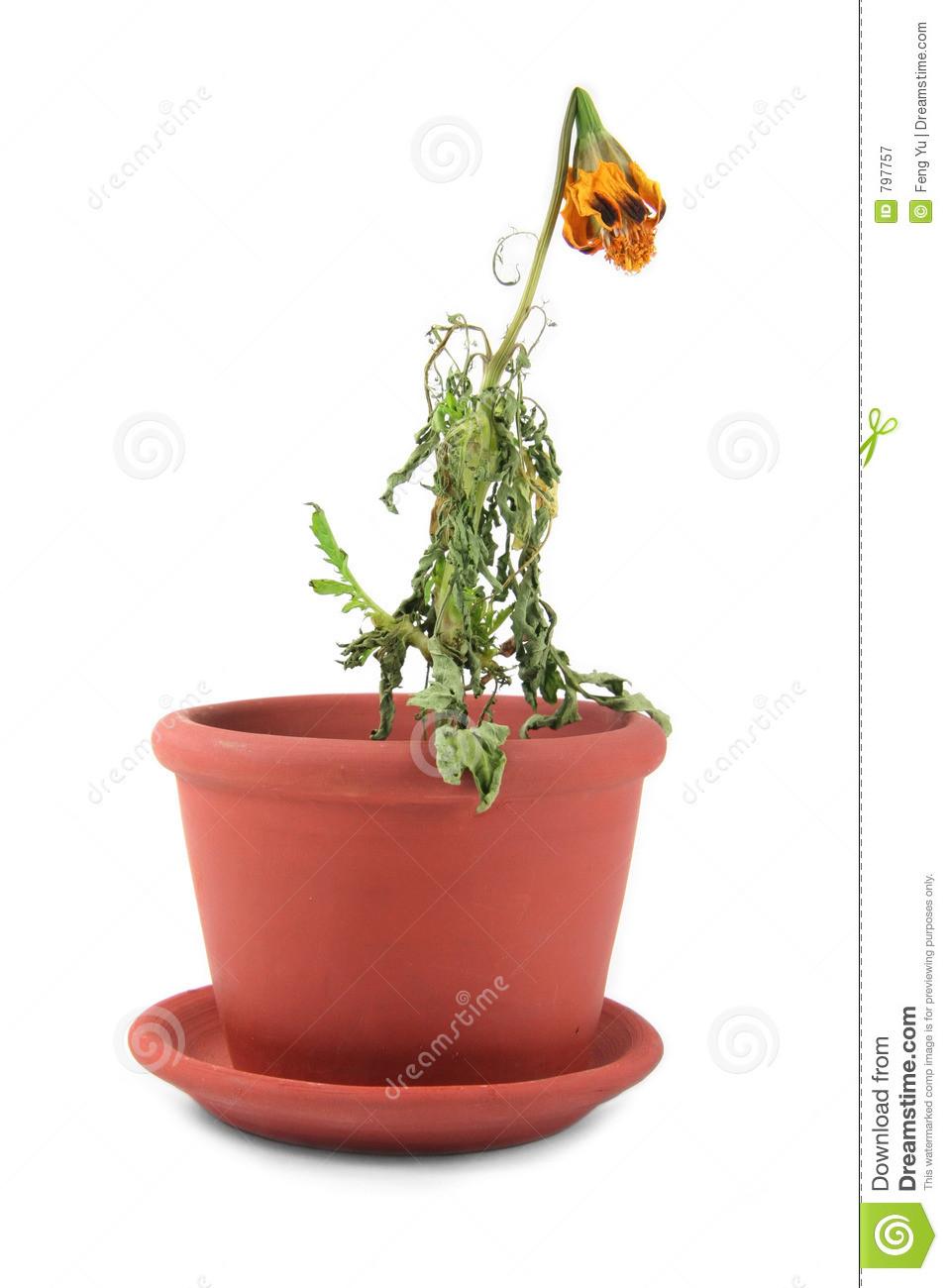 dead-flower-797757.jpg