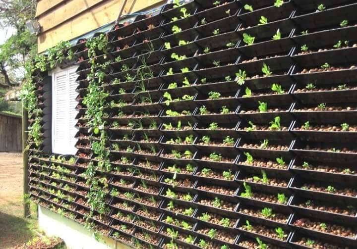 Jardim Vertical em Brasilia (1)