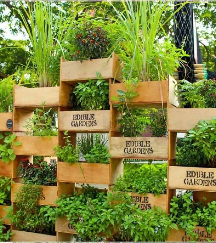 Jardim Vertical (5)
