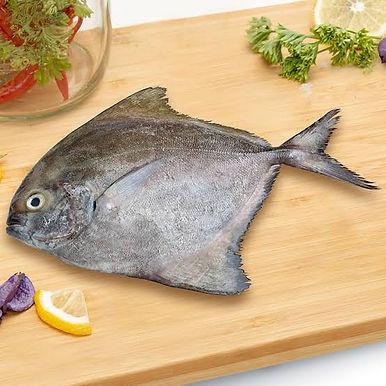Halwa/Black Pomfret Full Fish 1 KG