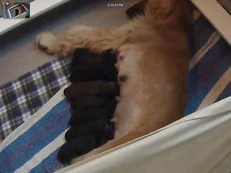 Karen Puppies.jpg