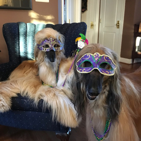 Two Party-Gras Girls.jpg